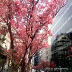 ONSA WORKSHOP | 春の「だいだい会」。春に進める、最大の一歩を刻みました!